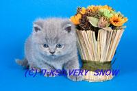 http://www.snow.alvas.ru/Foto/K1.jpg