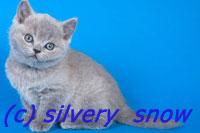 http://www.snow.alvas.ru/Foto/K5.jpg