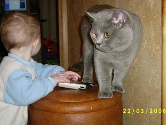 Британский кот для детей
