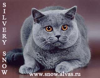 ������� ���������� ��� King Lion Silvery Snow.