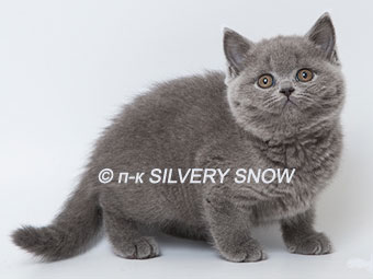 http://www.snow.alvas.ru/Foto2/K_140a9.jpg