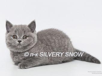 http://www.snow.alvas.ru/Foto2/K_141a7.jpg