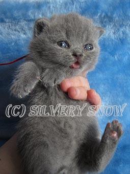 http://www.snow.alvas.ru/Foto2/K_164.jpg