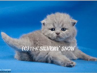Я на выставке кошек.