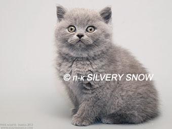 http://www.snow.alvas.ru/Foto2/K_V1.jpg