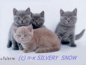 котятам 1.5 месяца